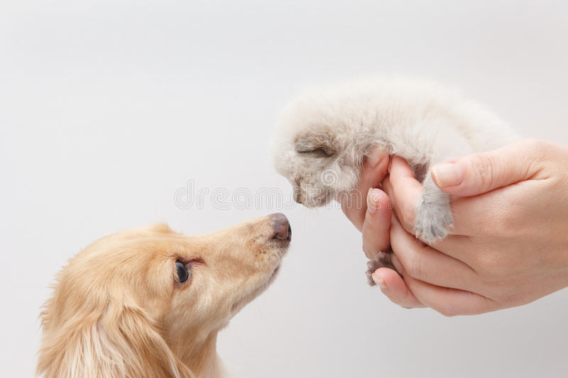 Cats and Dogs royalty free stock photos