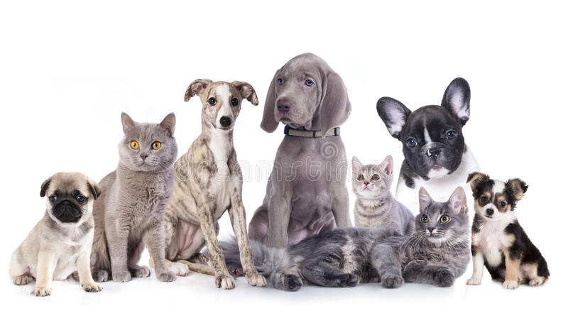 Cats and dogs. Group of cats and dogs in white background, cat and dog stock photo