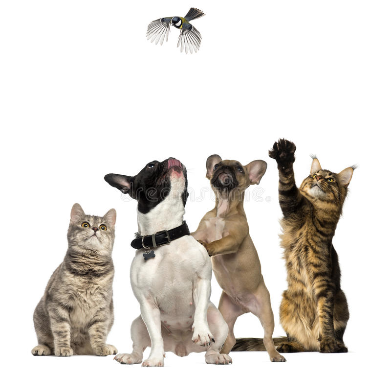 Cats and Dogs trying to catch a bird flying. Isolated on white stock photos