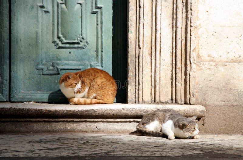 Download Cats in Dubrovnik stock photo. Image of balkans, detail - 4228646