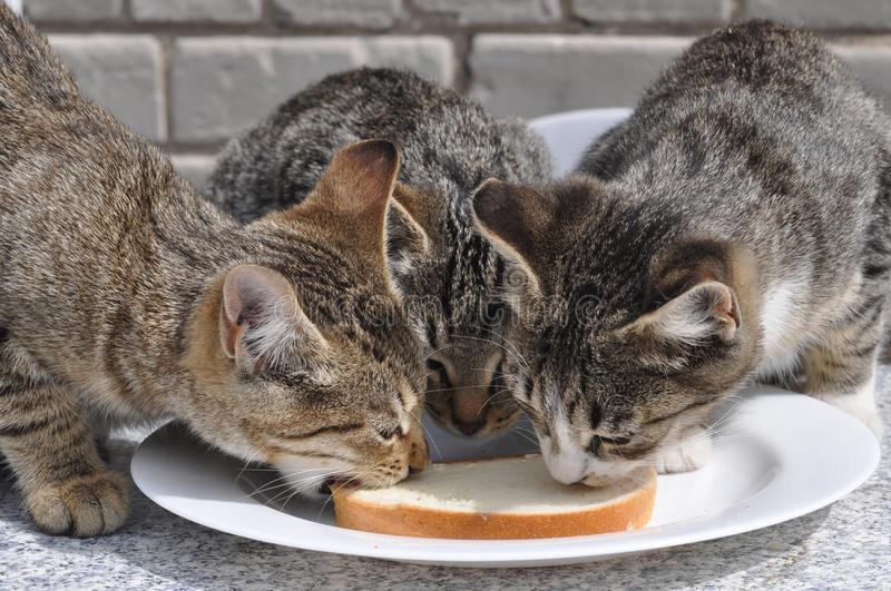 Cats Eat Royalty Free Stock Images