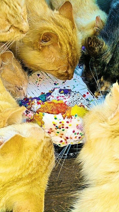 Cats eating birthday cake stock photos