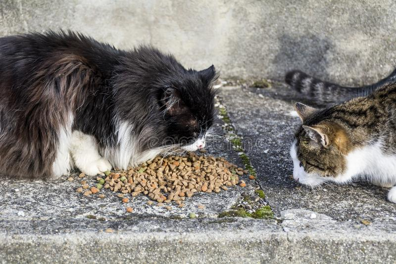 Cats Eating Dry Food stock photo