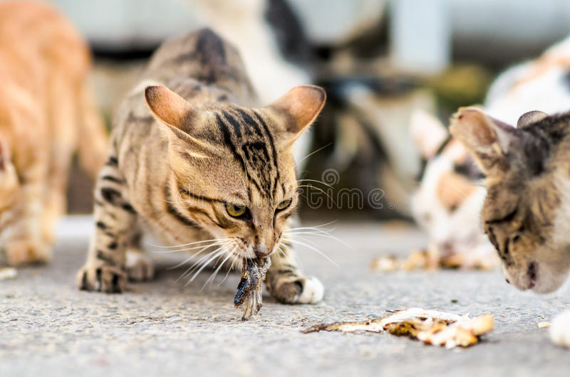 Cats eating a fish stock photo image of eating isolated for Dreaming of eating fish