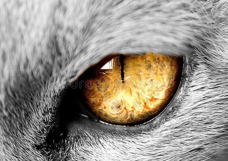 Cats eye. A photograph of a saimese cats eye looking at a sunset