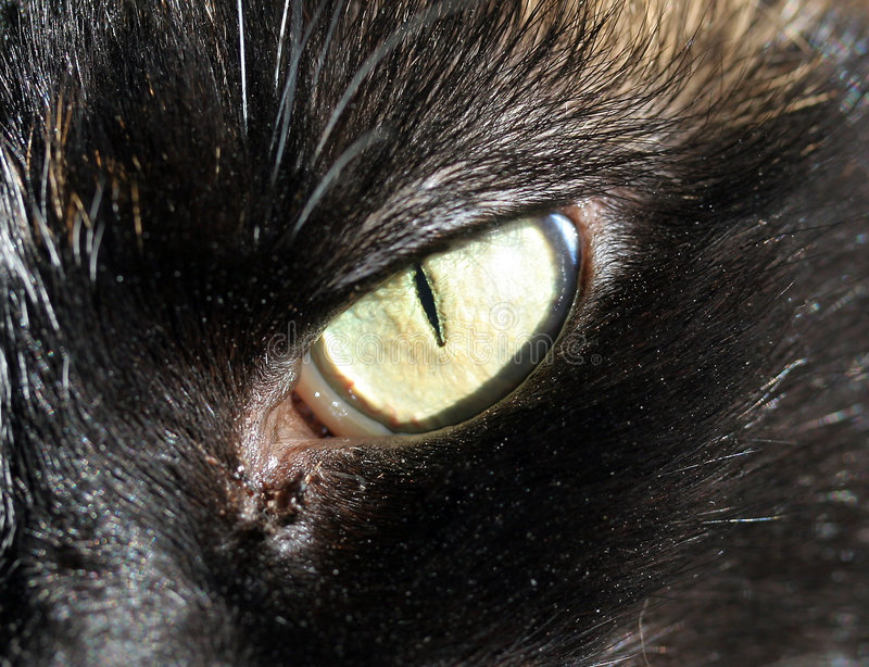 Download Cats Eye Close up stock image. Image of detail, green, black - 707281