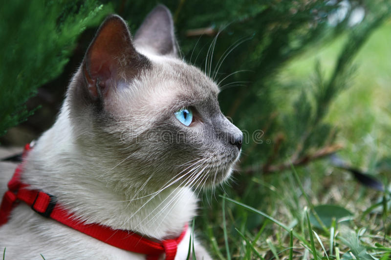 Download Cats eye`s stock photo. Image of blue, kittens, environment - 15735182