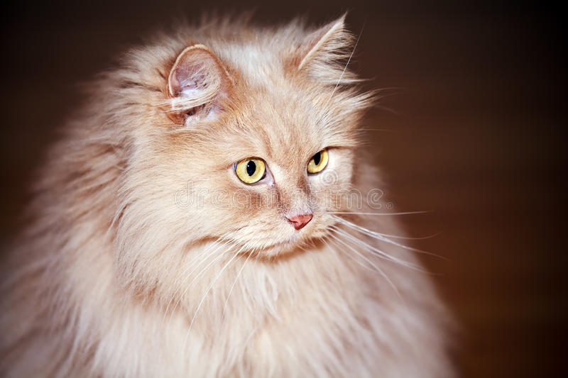 Download Cats eyes stock image. Image of fluffy, nature, persian - 20884389