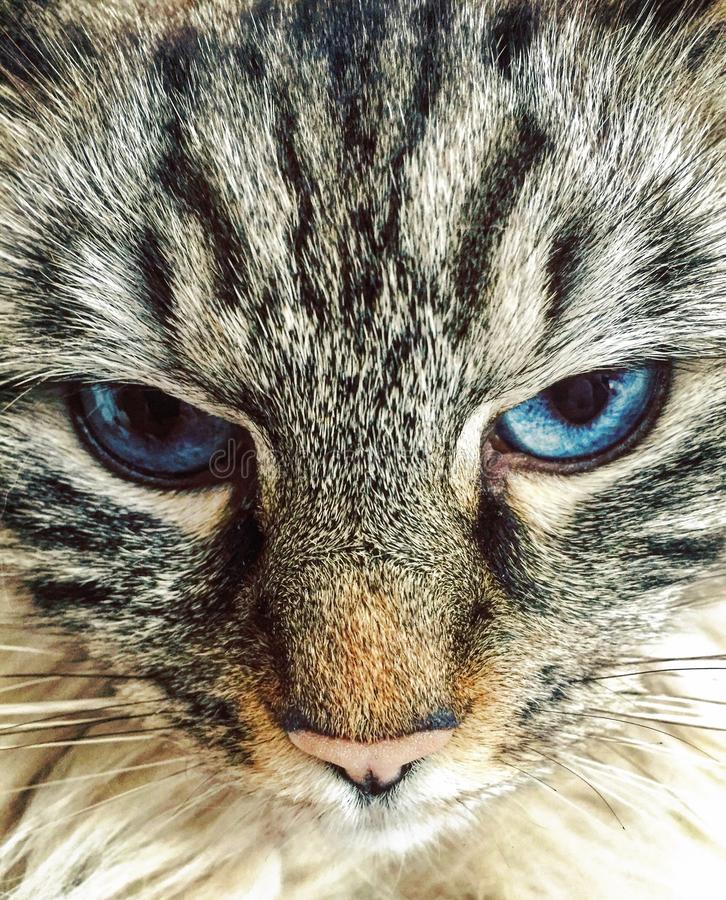 Cats eyes royalty free stock image