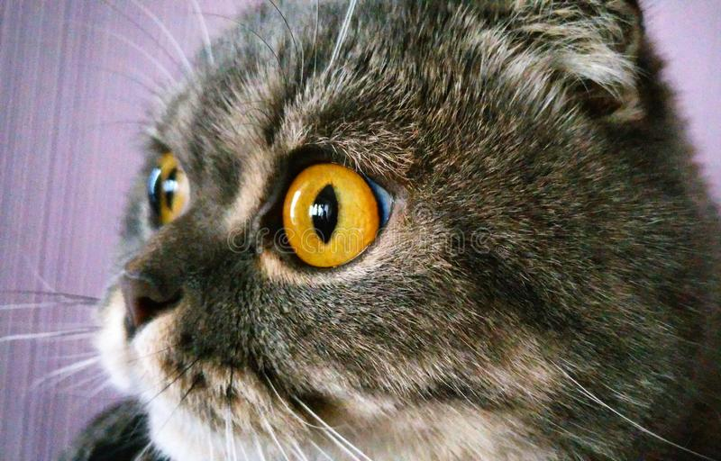 Cats eyes stock image