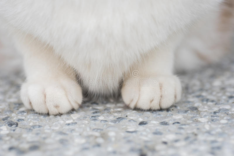 Cats feet. Closeup portrait of cat, focus on feet royalty free stock images