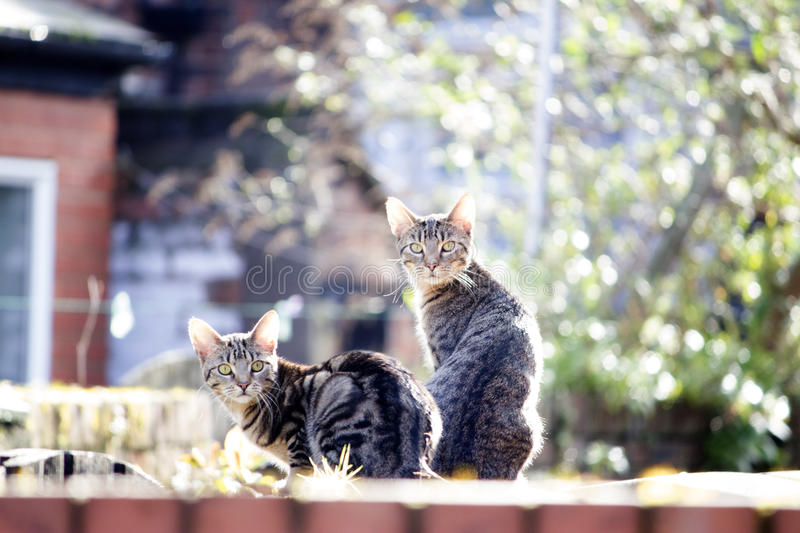 Cats on a fence looking at the camera stock photo