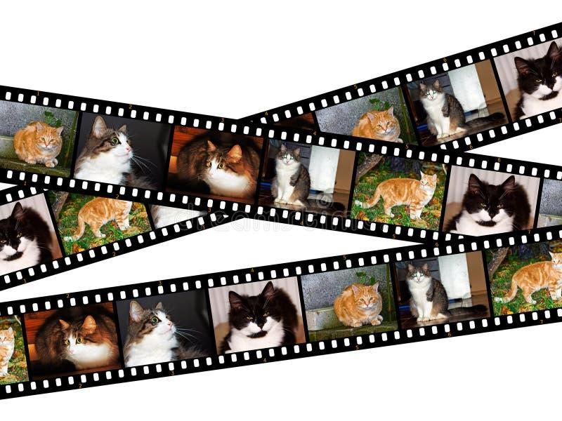 Cats Filmstrips stock photos