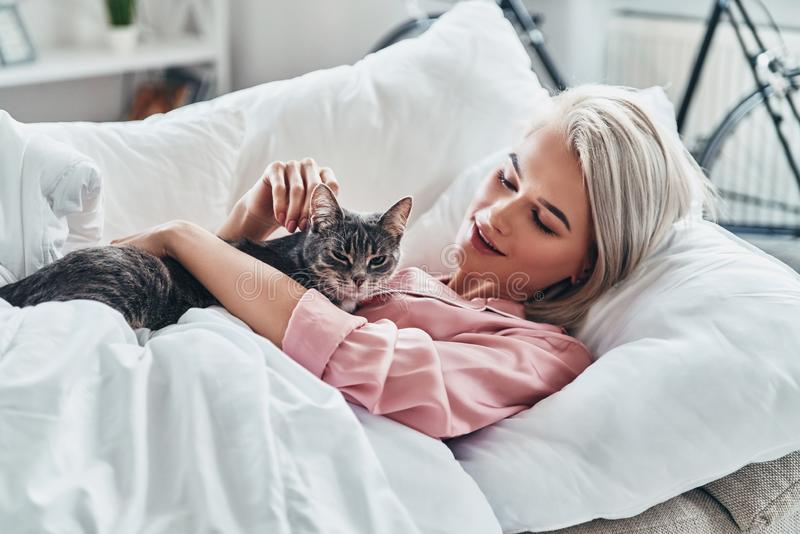 Cats friendly. stock images