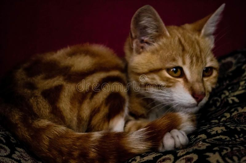 Cats are friendly and clean animals for people royalty free stock image