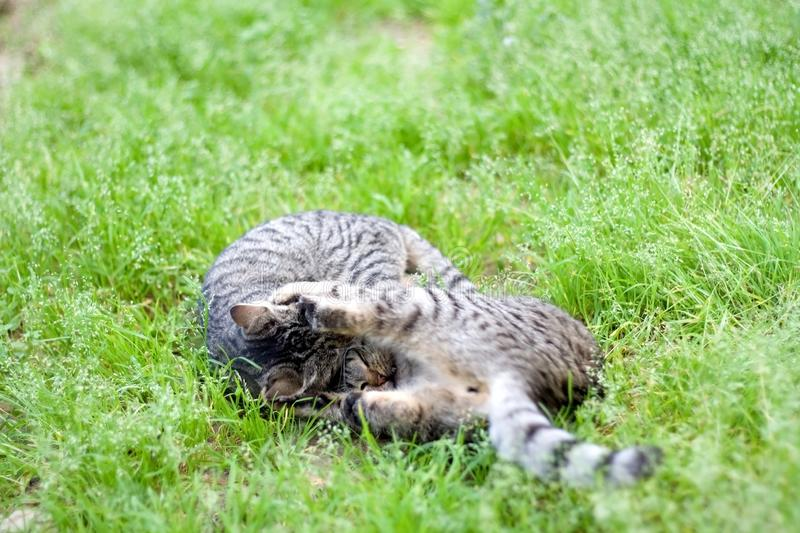 Cats in the Garden royalty free stock photo