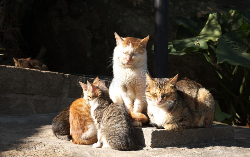 cats Get warmmer stock photography