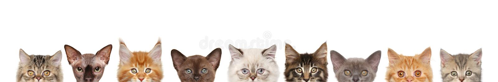 Cats, half of muzzle on white stock image