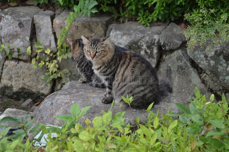 Cats At Himeji Castle royalty free stock images