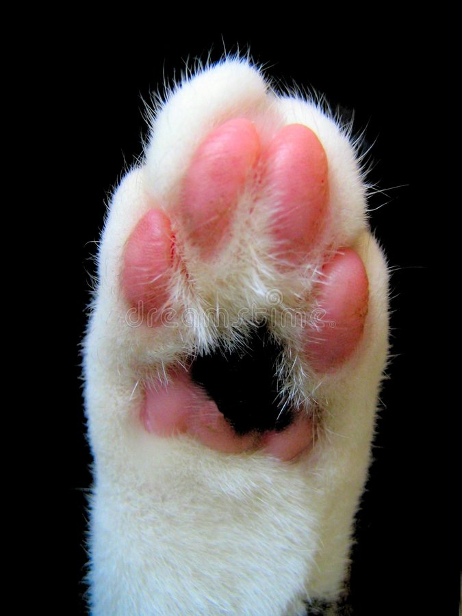 Download Cats Honor stock image. Image of feline, foot, background - 1972753