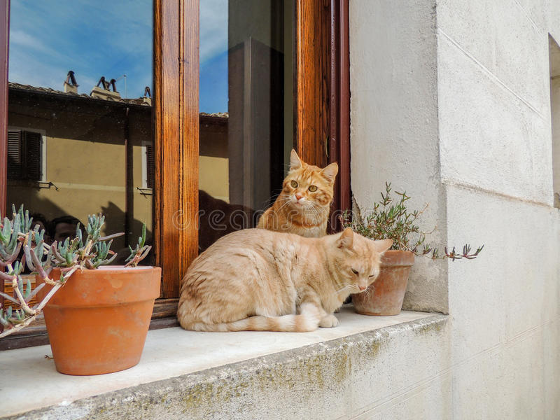 Cats of Italy stock photography