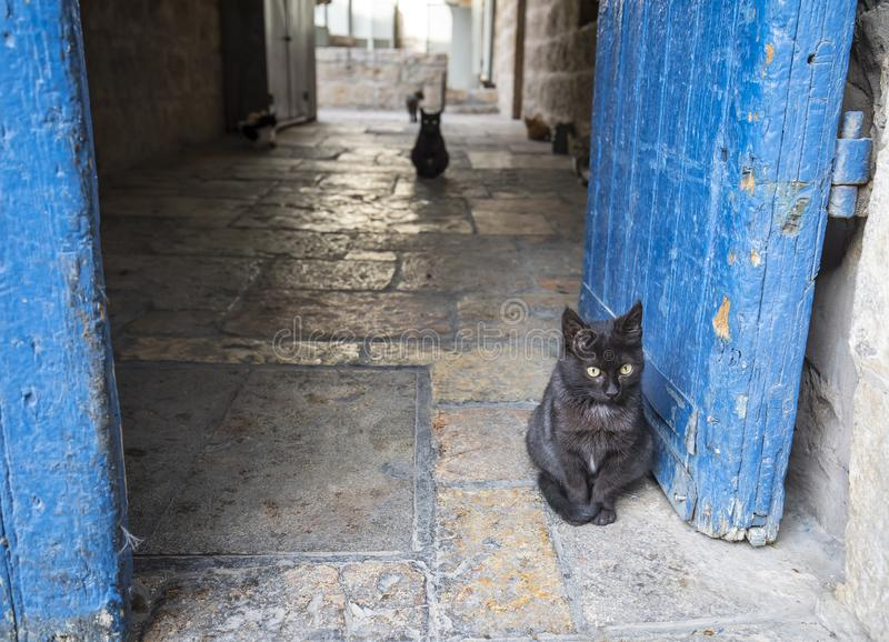 Cats in Jerusalem. A black alley cat in the blue gate of a Jerusalem, Israel, alley. A few alley cats can be seen in its background royalty free stock images