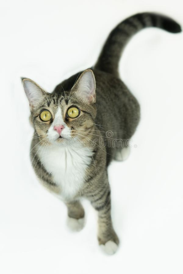 The cats look very cute this way. The cat stood on the white floor and it was looking this way, it looked very cute stock photos