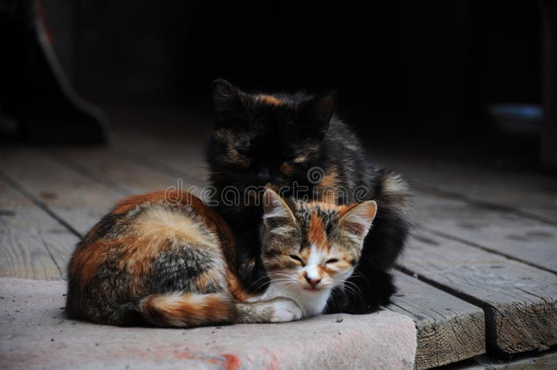 Two lovely cat. Cats love each other as well as people royalty free stock images