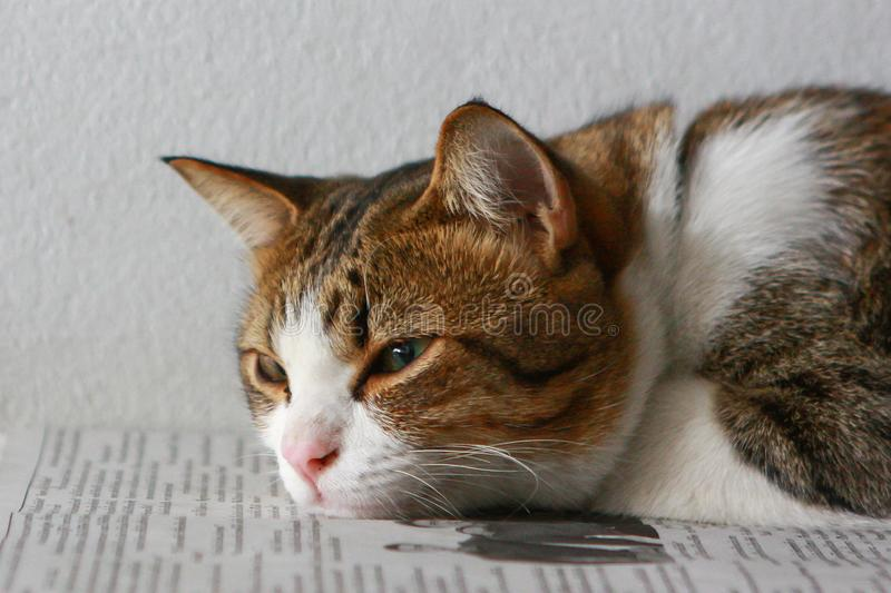 Cats lying on the newspaper stock photos