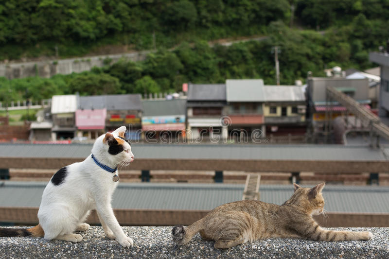 Cats lying on the wall. royalty free stock images