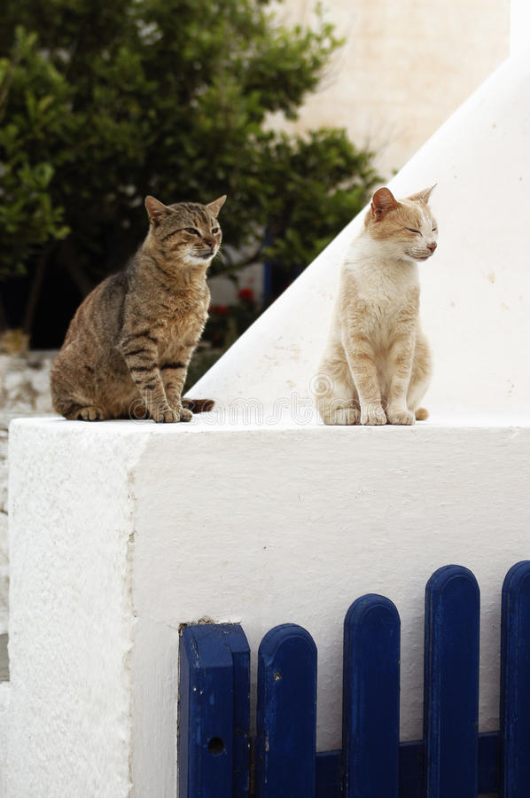 Cats on a mantel. At a Greek Island royalty free stock photo