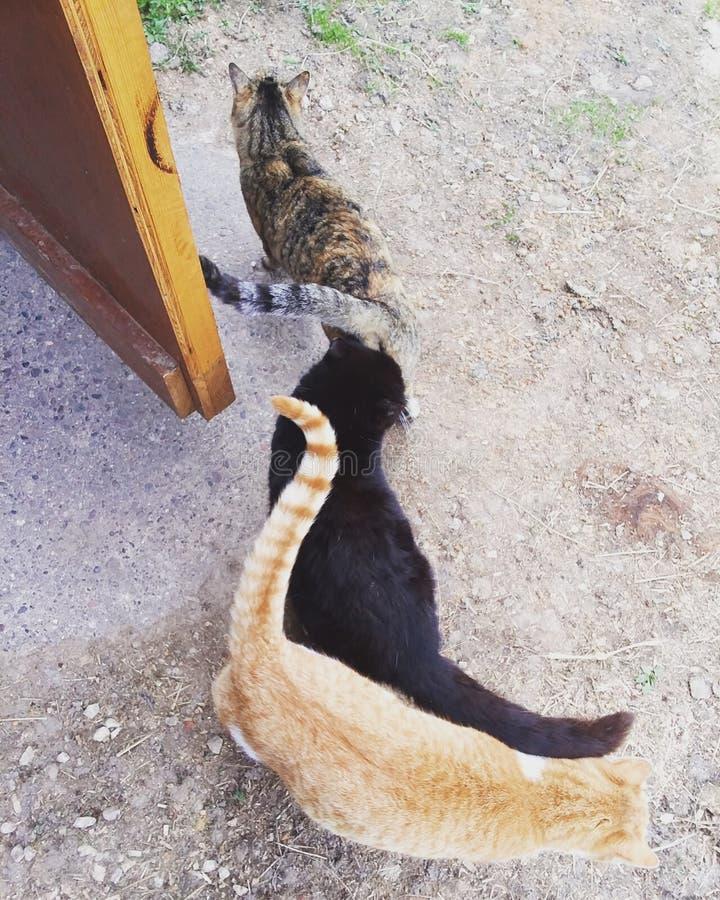 Cats of many colors. Orange, gray, black, door stock photos