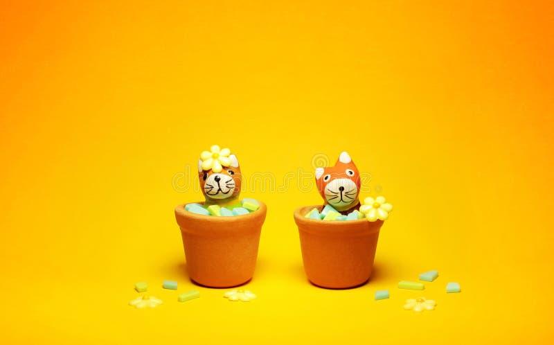 Cats model in flowerpot stock images