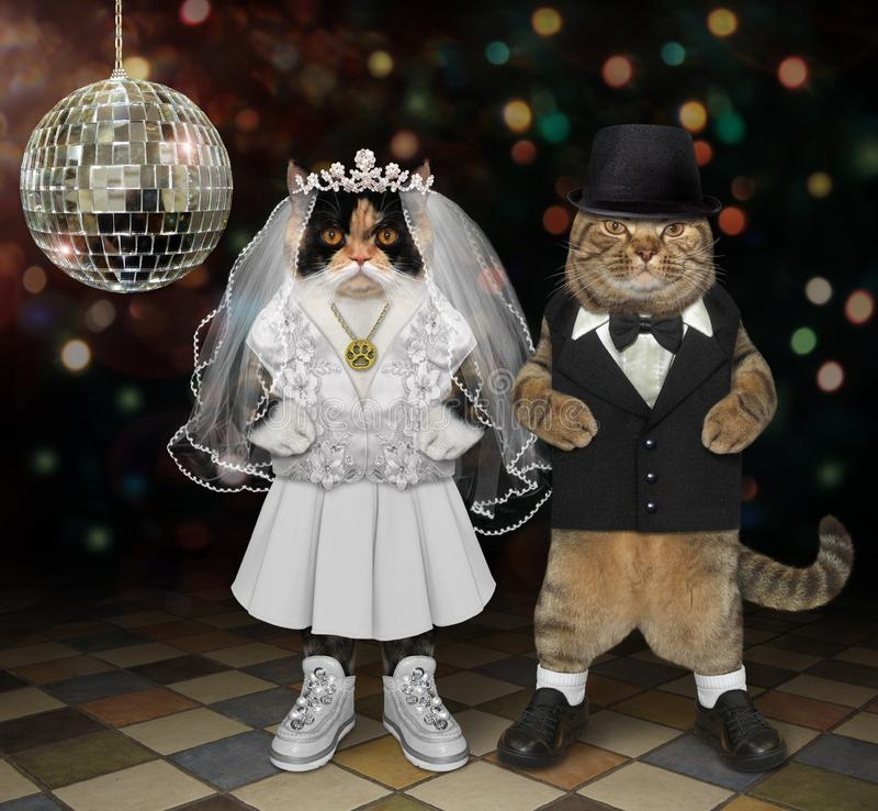 Cats newlyweds in nightclub fotografia stock libera da diritti