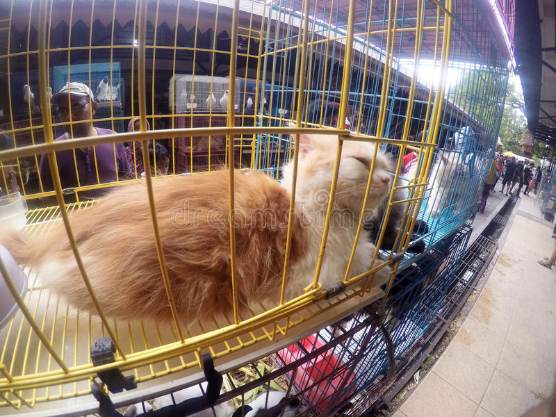 Cats. People see cats in cages sold in pet market in the city of Solo, Central Java, Indonesia stock images