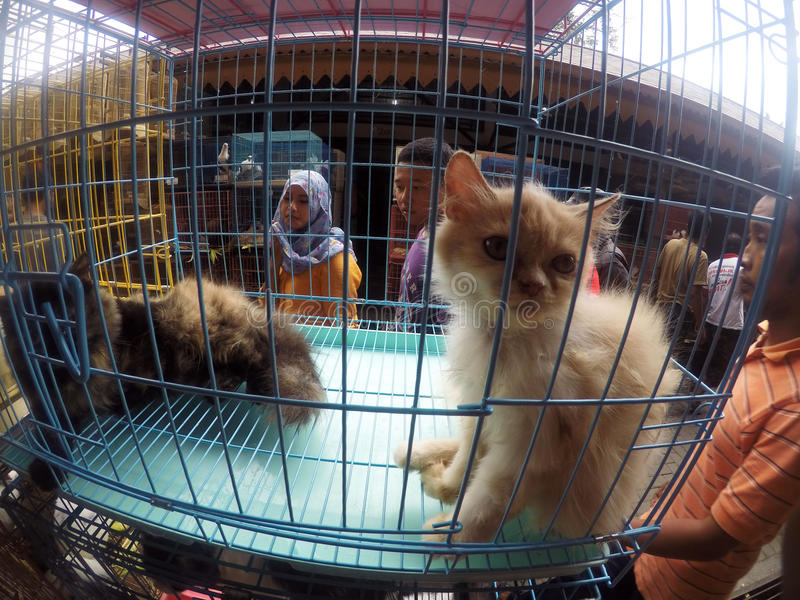 Cats. People see cats in cages sold in pet market in the city of Solo, Central Java, Indonesia royalty free stock image