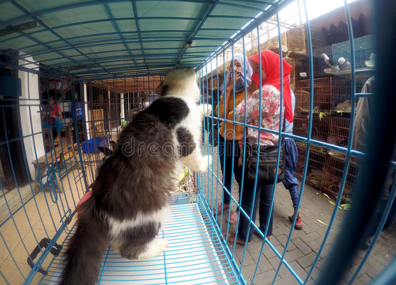 Cats. People see cats in cages sold in pet market in the city of Solo, Central Java, Indonesia stock photography