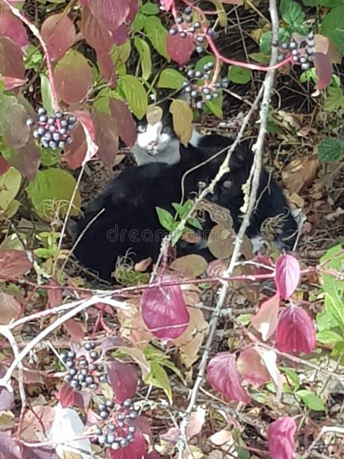 Wild kittens stock photos