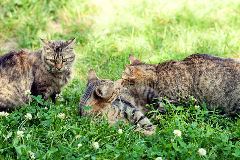 Cats are played on the grass stock photo
