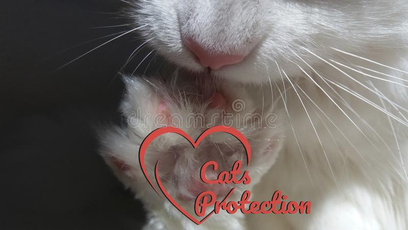 Cats protection logo with white paw cat for charitable organizations. Cats protection logo with white paw cat for charitable organizations, pet shops and vet royalty free stock photo