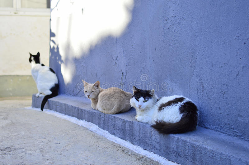 Cats. Resting in an alley at a Greek island stock photography