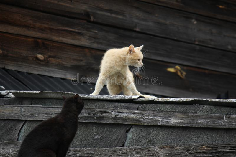 Cats on the roof royalty free stock images