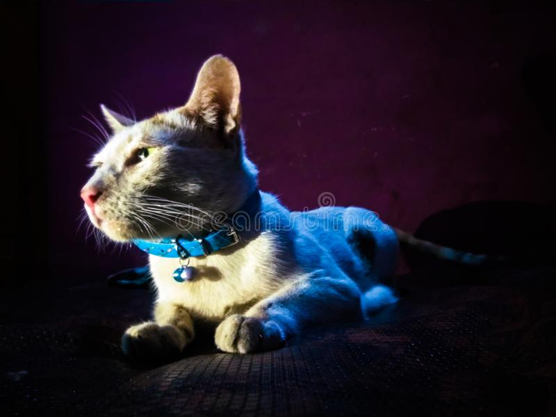 Cats are royal and dogs are loyal royalty free stock photo