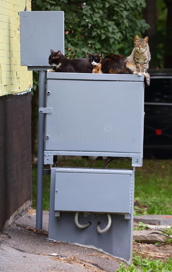 Cats sit on the electrical switchboard near the wall of the house stock photo