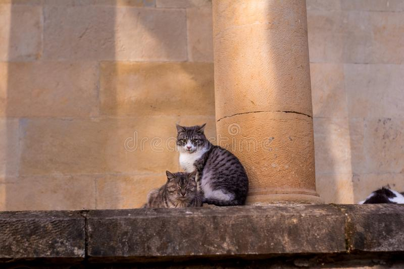 Cats sit on a stone and fall asleep stock photo
