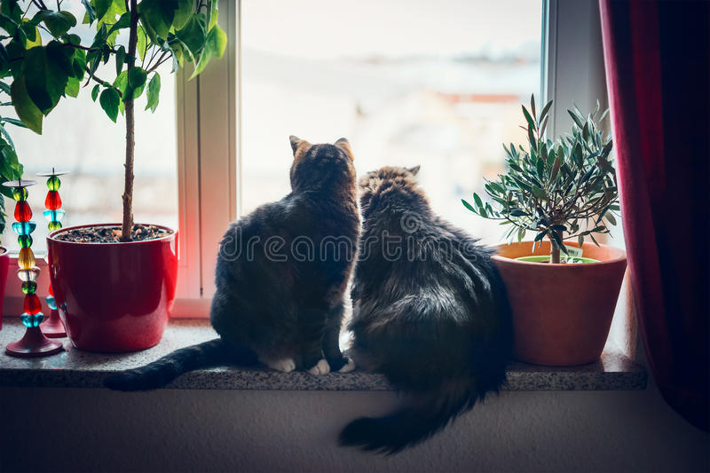Cats sits on window sill and looking outside. Two cats sits on window sill and looking outside in home furnishings stock photos