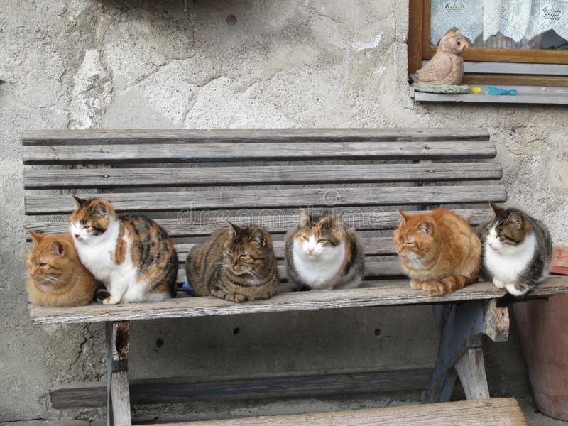 cats sitting on a bench royalty free stock image