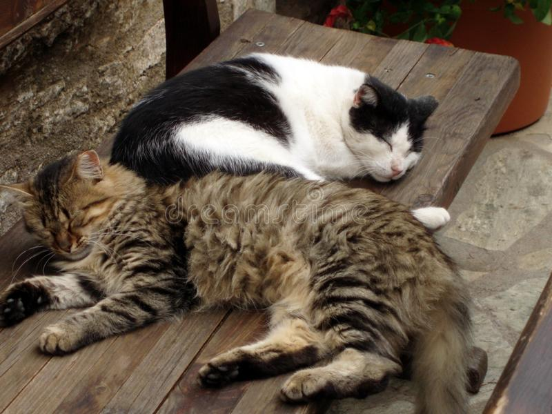 Cats sleeping on a bench stock images