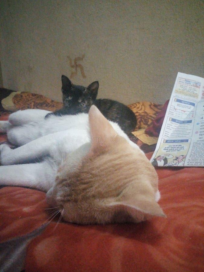 Cats sleeping stock photos