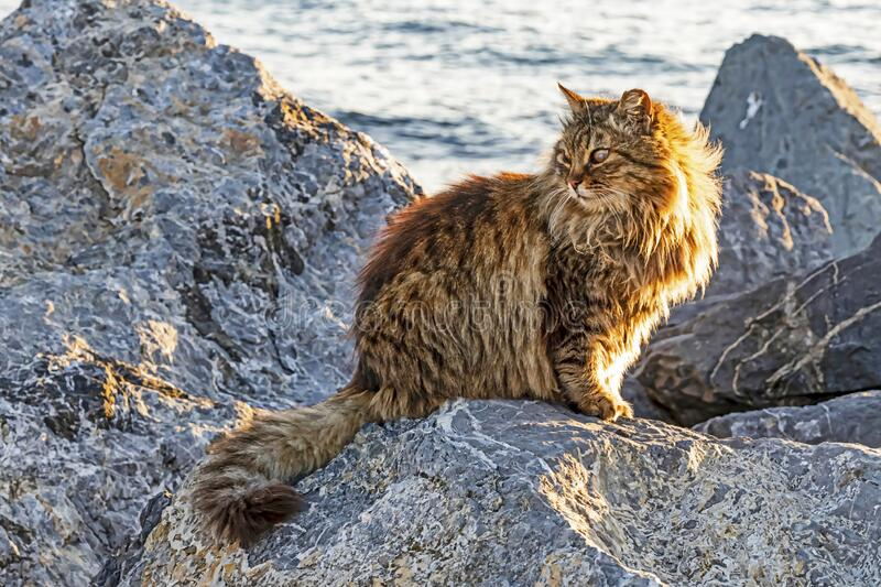 Cats are small mammals which most commonly refers to the domestic cat. Close up cats in nature stock photography